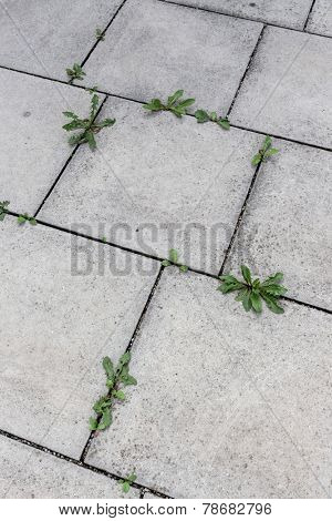 plants growing between stone slabs out of a bottom