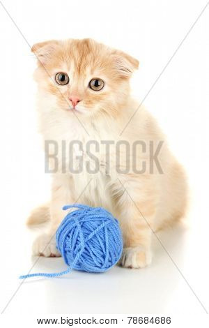 Cute little Scottish fold kitten with skein of thread, isolated on white