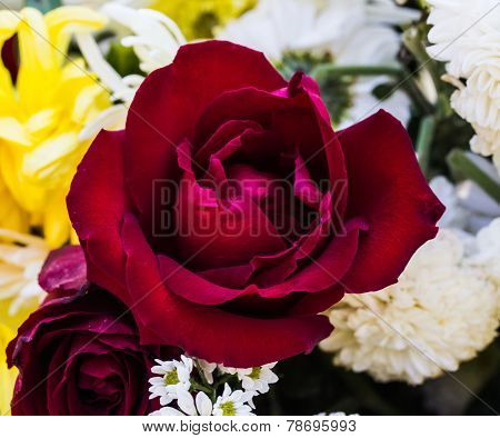 Beautiful Red Rose And Many Flowers