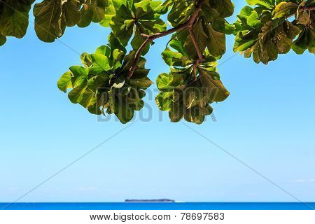View From Underneath A Tree On A Tropical Island