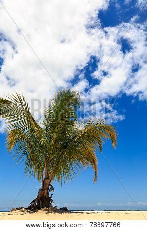 Palm Tree On A Tropical Beach Against A Blue Sky