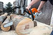 stock photo of sawing  - The worker cutting the tree with a saw - JPG