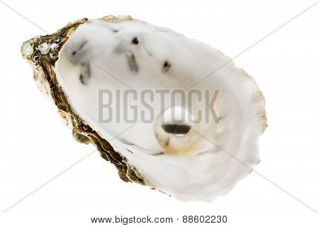 Oyster With Pearl