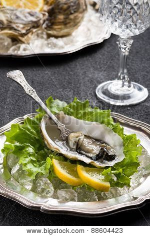 Fresh Oyster On Plate Ready To Eat