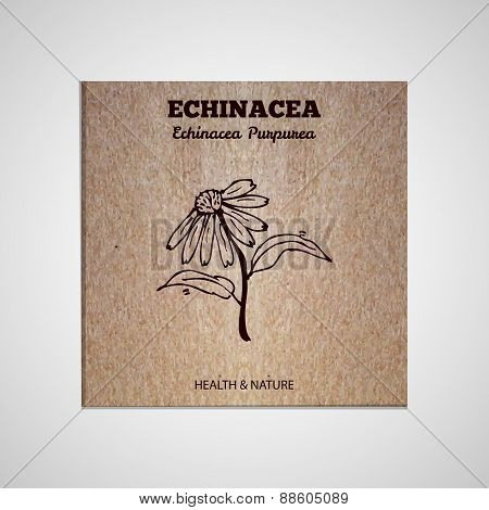 Herbs and Spices Collection - Echinacea