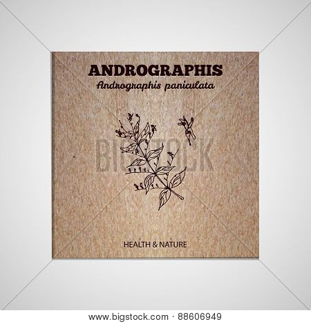 Herbs and Spices Collection - Andrographis