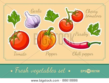 Set of fresh organic vegetables cherry tomato pepper garlic chili and parsley. Eps10 vector illustration. Isolated on white background