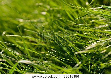 Grass Macro In Natural Light