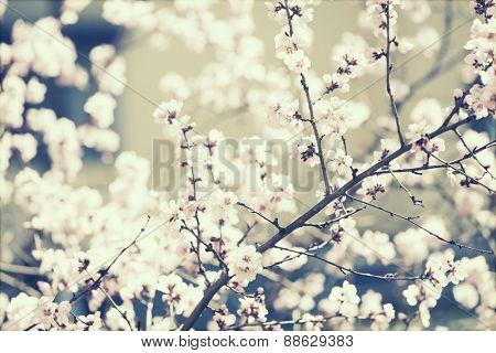 Spring blossom - retro styled photo