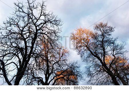 Bare Trees On Sky
