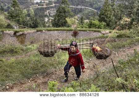 Chinese Farmer Woman Carrying A Heavy Load On Their Shoulders.