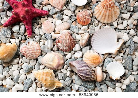 Texture Of Sea Bottom Covered With Colorful Seashells And Starfishes