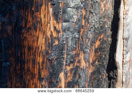 burnt tree bark texture, close-up