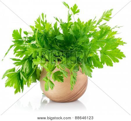Bunch fresh parsley. Isolated on white background