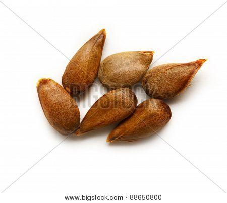 Dry Apple Seeds