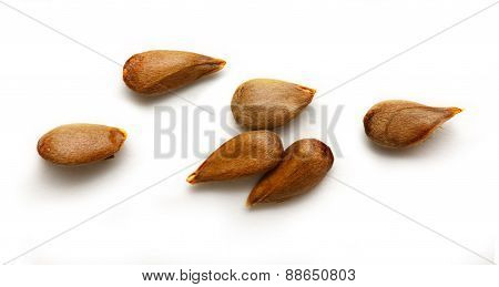 Dry Apple Seeds