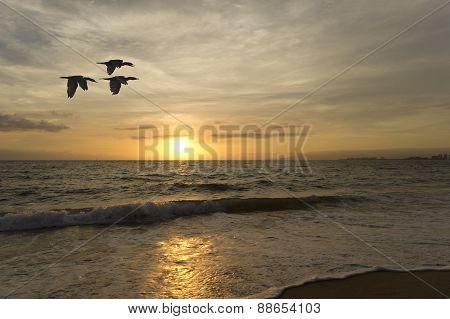 Birds Flying Ocean At Sunset