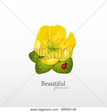 Yellow cherry flower with leaves and ladybug. Logo of yoga studio or beauty salon