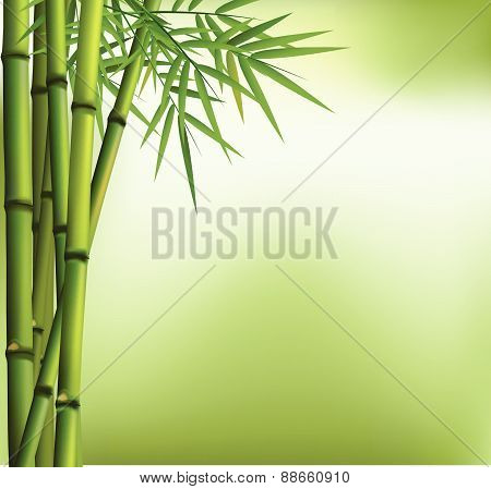 Green bamboo grove  on green background
