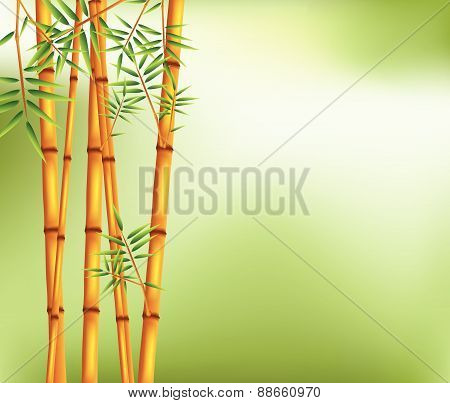 bamboo on old grunge green and white texture background