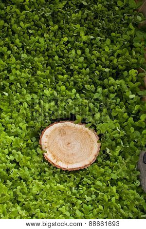 stump tree on green field
