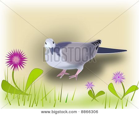 Pigeon and Flowers.