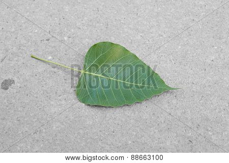 Green Leafs On Concrete Floor