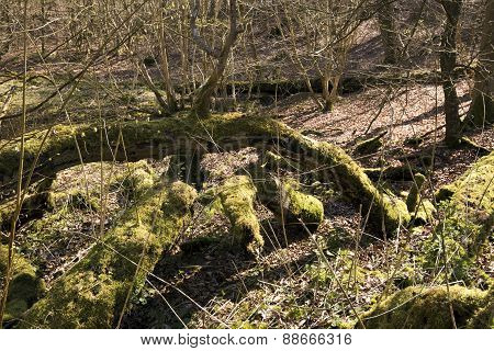Green Moss On Falen Trees