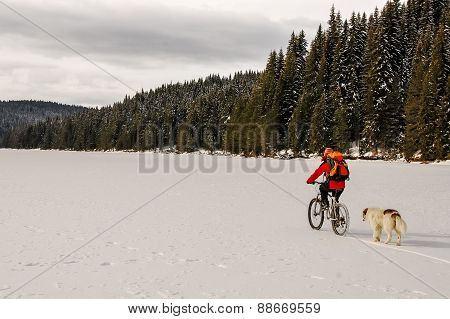 Mountain Biker And Shepherd Dog On A Frozen Lake In  Pine Forest.