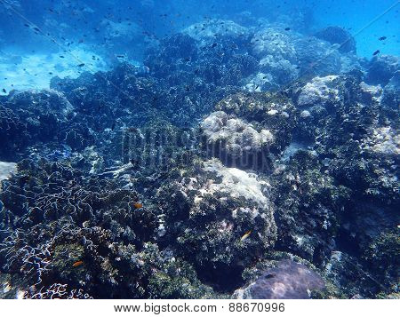 Coral And Reef Life