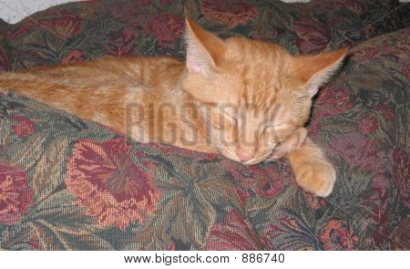 Cat Nappin On Couch