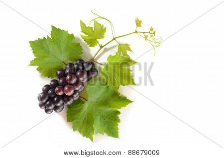 Black Grapes With Leaves On White Background