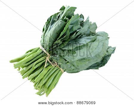 Kai-lan, Chinese Broccoli, Chinese Kale In Isolate White Background