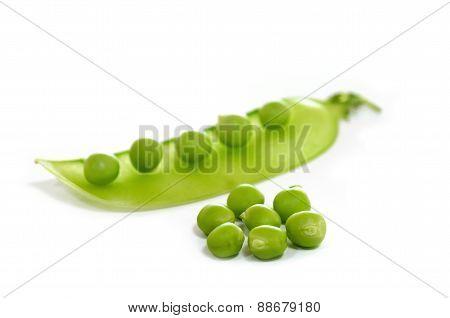 Sugar Pea