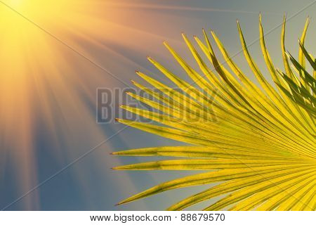 Sun over green palm leaves