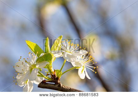 Beautiful blossom. Background with flowers on a spring day.