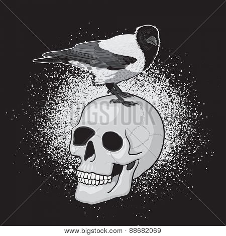Crow Bird on the Human Skull with Black Background