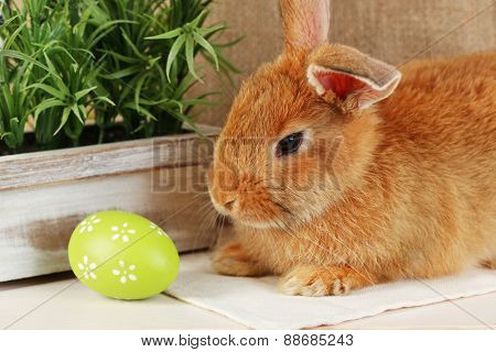 Cute red rabbit with Easter egg on shelf, closeup