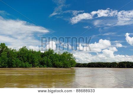 Indonesia - Tropical Jungle On The River, Borneo