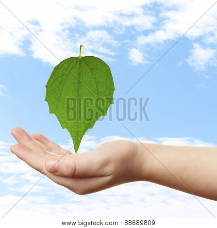 Female hand with green leaf on sky background