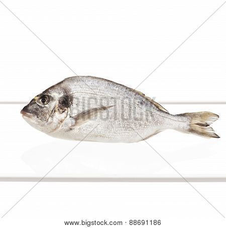 Fresh Fish Inside Refrigerator