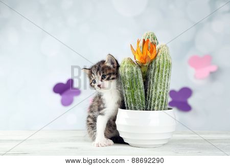 Cute little kitten and cactus on light background