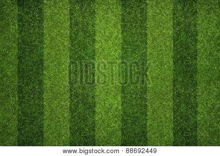 Soccer Field Texture