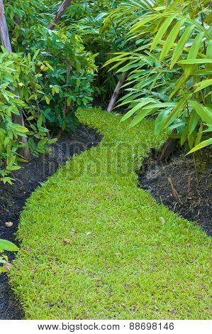 Curve Way Of Fresh Green Grass