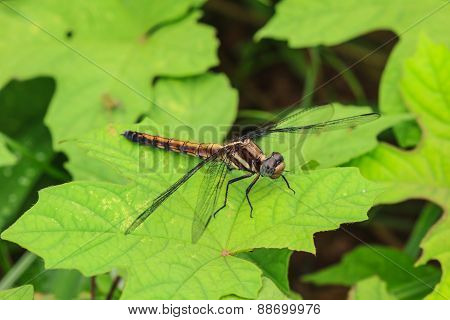 Dragonfly Sitting On A Branch