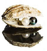 stock photo of pearl-oyster  - Oyster with black and white pearls on white background