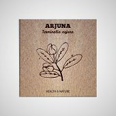 foto of arjuna  - Herbs and Spices Collection  - JPG