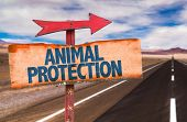 image of animal cruelty  - Animal Protection sign with road background - JPG