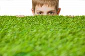 picture of peep  - Portrait of a boy peeping out through fresh spring green grass - JPG