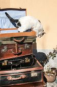 pic of old suitcase  - Old vintage retro used leather suitcases stacked and placed one on another and cat on top in house backyard